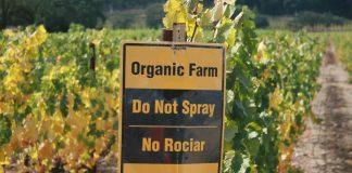 Υπερτερεί στα σημεία αλλά και στο σύνολο η βιολογική έναντι της συμβατικής γεωργίας