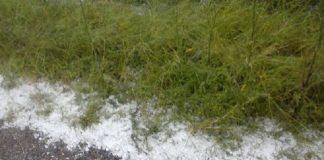 Για ολοκληρωτική ζημιά από το χαλάζι στις καλλιέργειες των Φαρσάλων, κάνει λόγο η ΕΟΑΣΝΛ