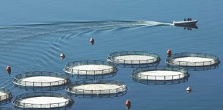 Αναστολή έκδοσης αδειών μονάδων υδατοκαλλιέργειας στον Κόλπο Καλλονής με απόφαση ΥΠΑΑΤ