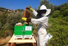 Ανακοίνωση της ΔΑΟΚ ΠΕ Λακωνίας για τους μελισσοκόμους της περιοχής