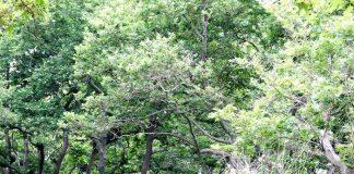 Αναζητούνται καλλιεργητές αρωματικών και φαρμακευτικών φυτών στη Σαμοθράκη