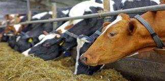 Καρδίτσα: Το πρόγραμμα ελέγχων στις κτηνοτροφικές μονάδες για την οζώδη δερματίτιδα