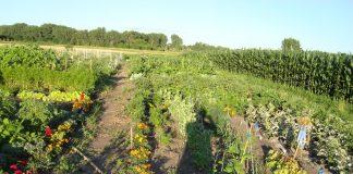 ΑΠΘ: Ξεπέρασε κάθε προσδοκία ο αριθμός των αιτούντων για συμμετοχή στα δωρεάν μαθήματα βιολογικής γεωργίας σε ανέργους