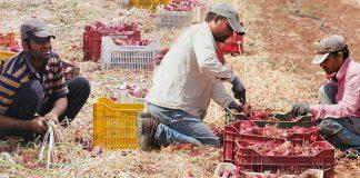 ΓΣΕΕ: Ανέλεγκτη η παραβατικότητα στην εργασία στον αγροτικό τομέα