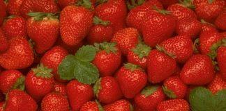 Γιορτή φράουλας στη Νέα Μανωλάδα