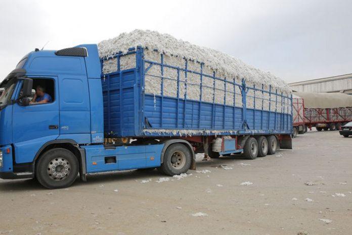 Hellastat: Λιγότερα στρέμματα, χαμηλότερη η παραγωγή βάμβακος τη σεζόν 2015/2016