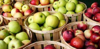 76,9 εκατ. τόνους θα φτάσει η παγκόσμια παραγωγή μήλων