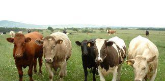 Έβρος: Ερώτηση βουλευτών ΚΚΕ για τις ελλείψεις στις κτηνιατρικές υπηρεσίες