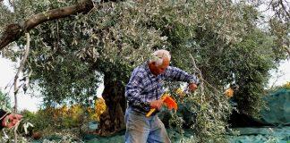 Εξόφληση σε έως 120 δόσεις για τους αγρότες με ελάχιστο ποσό δόσης τα 30 ευρώ