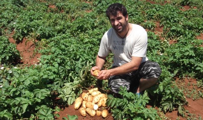 Ο χαμένος κύκλος της πατάτας στις Λιβανάτες