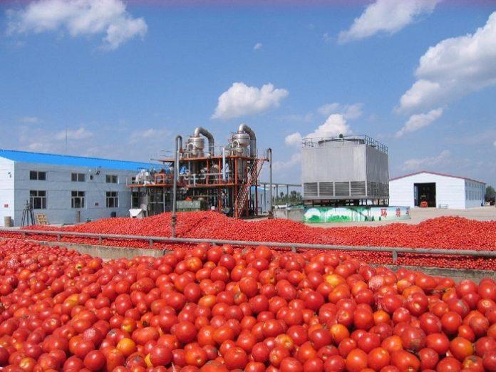 Οι χαμηλότερες τιμές φρέναραν στον κάμπο τη βιομηχανική ντομάτα
