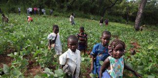 Παιδική εργασία και γεωργία