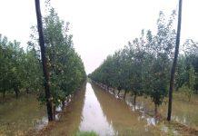Μεγαλόπολη: Αιτήσεις για τους πλημμυροπαθείς του Ιουνίου