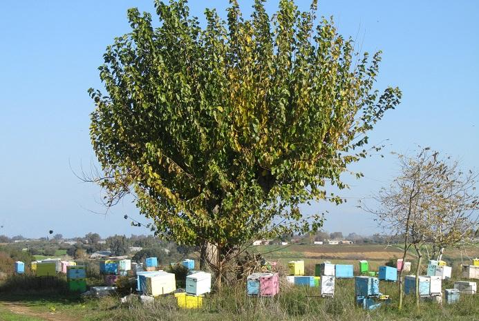 Λευκάδα : Εκπαίδευση μελισσοκόμων στις 27 και 29 Ιουνίου από τον ΕΛΓΟ