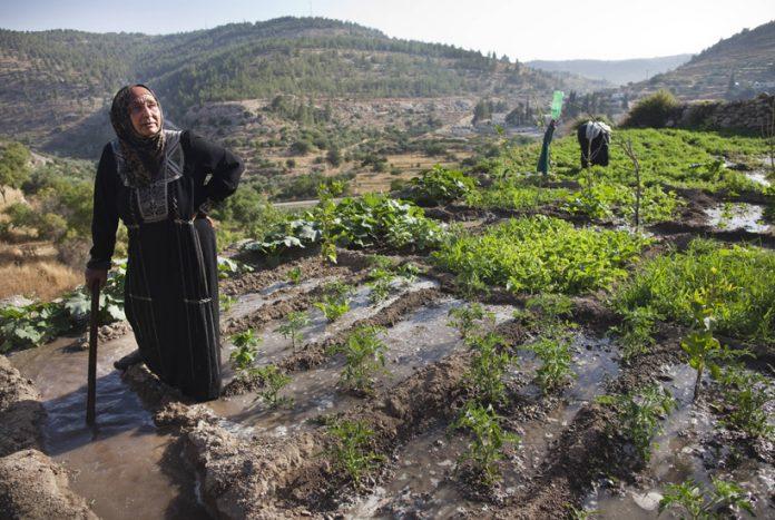 Στη Μέση Ανατολή «φύτρωσε» ο σπόρος της γεωργίας