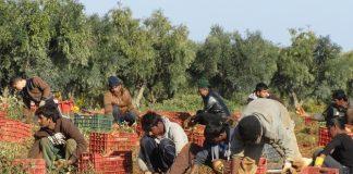 Συνολικά 20.215 καινούριες άδειες διαμονής αγρεργατών από Τρίτες χώρες φέρνει νέα ΥΑ