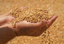 Παραλαβές σιτηρών και κριθαριού από την Ε.Α.Σ. Τρικάλων