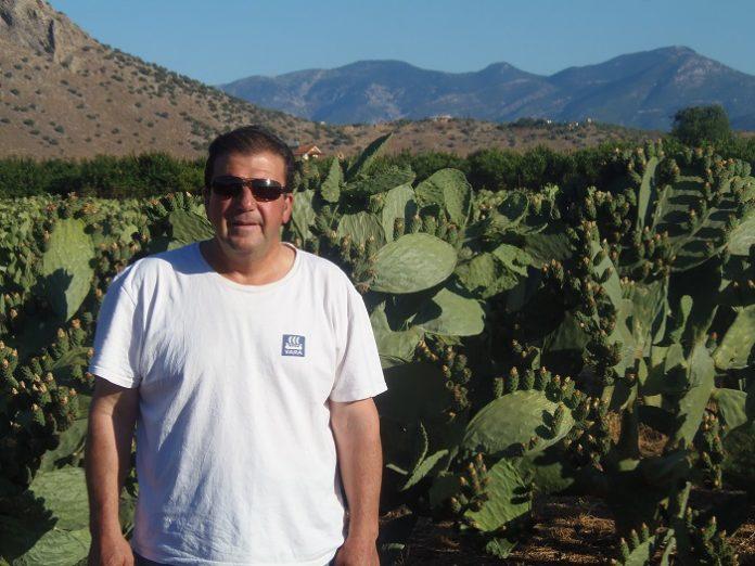 Ξεκίνησε η καλλιέργεια φραγκοσυκιάς στην Αργολίδα
