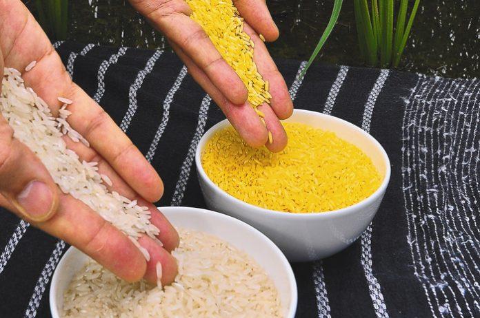Απογοητεύει το γενετικά τροποποιημένο «χρυσό ρύζι»