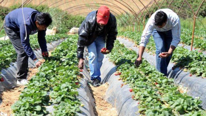 Υπογράφηκε η εγκύκλιος για την απασχόληση παράτυπων μεταναστών