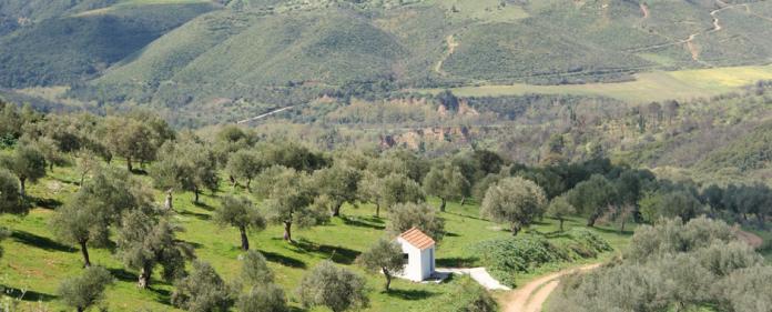 Γιώργος Μαθιόπουλος Στην Ορεινή Γορτυνία, το ελαιόλαδο γιατρεύει