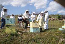 Ένα σχολείο για υποψήφιους μελισσοκόμους