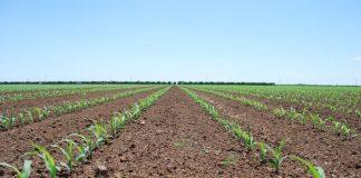 Απόφαση πληρωμής 60 εκατ. ευρώ που αφορά ανειλημμένες υποχρεώσεις σε γεωργοπεριβαλλοντικά μέτρα και βιολογικά του ΠΑΑ