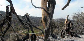 Χίος: Μάχη με τη μεγάλη φωτιά στα Μαστιχοχώρια