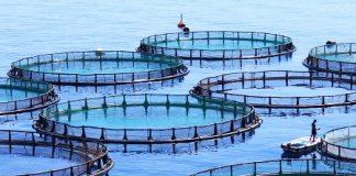 Ελληνική ιχθυοκαλλιέργεια: Αύξηση της παραγωγής και των εξαγωγών και προσέλκυση επενδύσεων