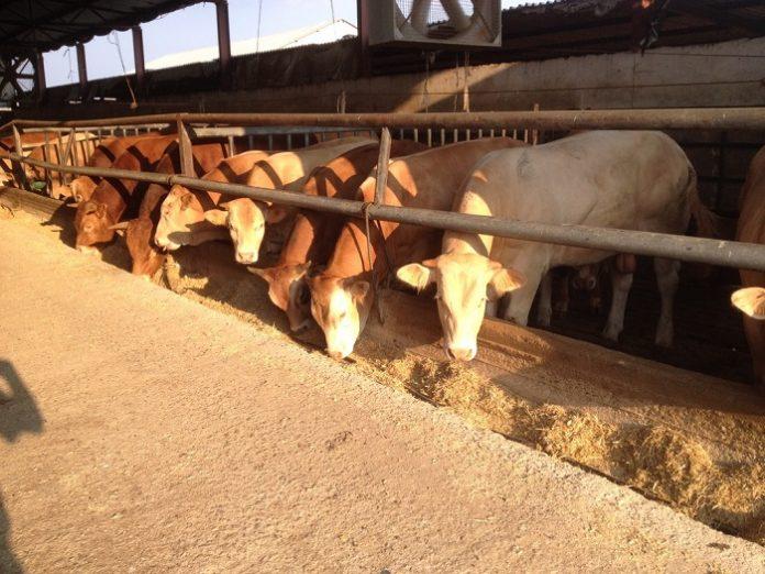 74% τσιμπάει το κριθάρι από τον παραγωγό του μέχρι τον κτηνοτρόφο