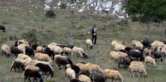 Πληρωμές σε πληγέντες κτηνοτρόφους