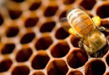 Αρκαδία: Η θεομηνία εξαφάνισε 1.500 μελισσοσμήνη και 50 πρόβατα