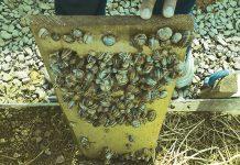 Μία σύγχρονη μονάδα επεξεργασίας και τυποποίησης σαλιγκαριών στη Λήμνο