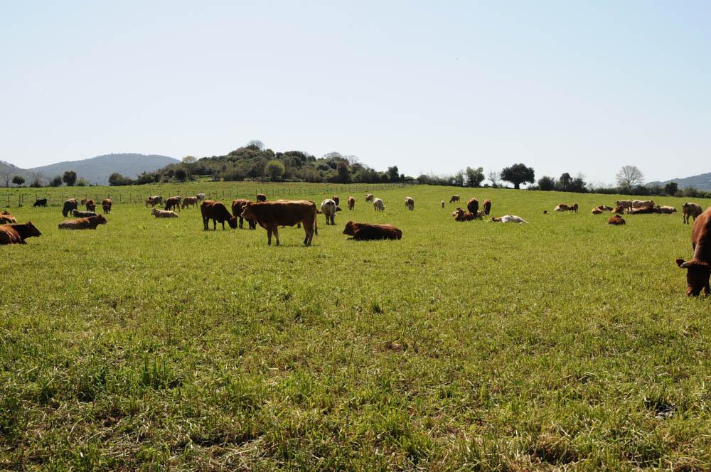 κτηνοτροφία Αγρίνιο