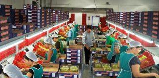 Στην κορυφή της τυποποίησης και εμπορίας αγροτικών προϊόντων