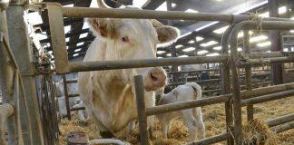 Σε σταθερή τροχιά ανόδου το βιολογικό κρέας στη Γαλλία