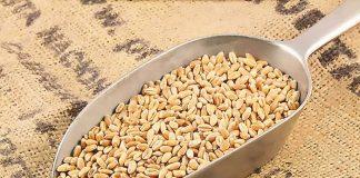 Η Τουρκία επισημοποιεί το εμπάργο στις εισαγωγές ρωσικών σιτηρών