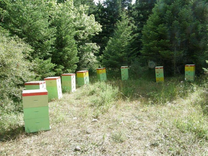 Στα πρόθυρα καταστροφής οι μελισσοκόμοι της Αρκαδίας