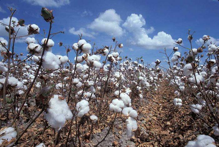 «Εάν συνδυαστεί η γεωργία ακριβείας μαζί με την ποιότητα του βαμβακιού, θα υπάρχει διπλό κέρδος»