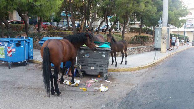 Αδέσποτα άλογα τρώνε από τα σκουπίδια στον Κορυδαλλό