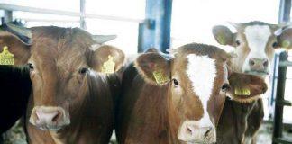 Εντός των ημερών αναμένεται να καταβληθούν αποζημιώσεις 5,5 εκατ. ευρώ σε κτηνοτρόφους