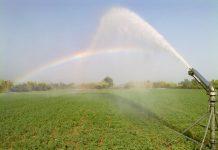 Η ποιότητα του νερού και οι επιπτώσεις στην ανάπτυξη του φυτού