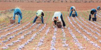 Επιστημονικό σεμινάριο για τα φαρμακευτικά φυτά στον Δ. Τρικκαίων