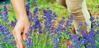 Κοζάνη: Από 19 έως 21/10 η 1η Κλαδική Έκθεση καιΣυνέδριο Αρωματικών & Φαρμακευτικών Φυτών