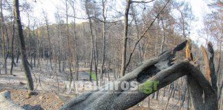 Παράταση πληρωμών για βεβαιωμένες οφειλές λόγω καταστροφών στην Εύβοια