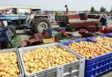 Άντεξαν τους πρώτους κλυδωνισμούς του Brexit οι εξαγωγές τροφίμων