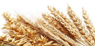 Γαλλικό σχέδιο στήριξης των παραγωγών σιτηρών