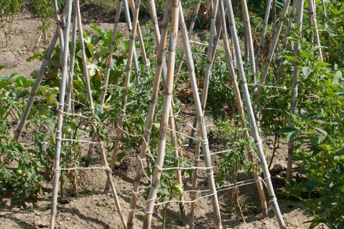 Η Μύκονος της αγροτικής παραγωγής που ανθίσταται στα κελέσματα του τουρισμού