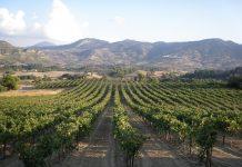 Εφαρμογή συμπληρωματικού προγράμματος αναδιάρθρωσης και μετατροπής των αμπελουργικών εκτάσεων στην Ελλάδα