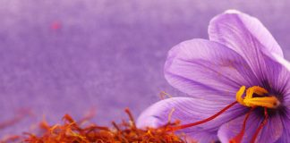 Προοπτικές και δυναμική της καλλιέργειας κρόκων Κοζάνης. Συνάντηση στο ΥπΑΑΤ